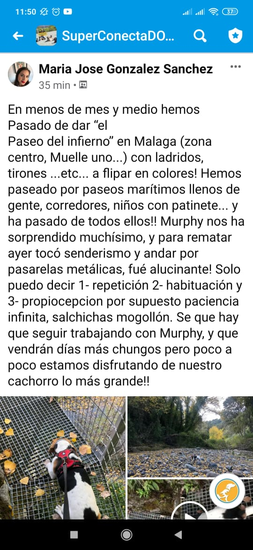 Testimonios_cachorros_4-min